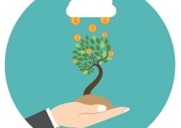money tree in a hand